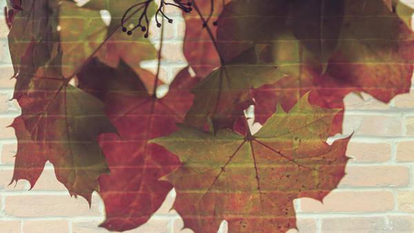 Photograph - Colorful Autumn Leaves On Trees Fine Art by Jacek Wojnarowski