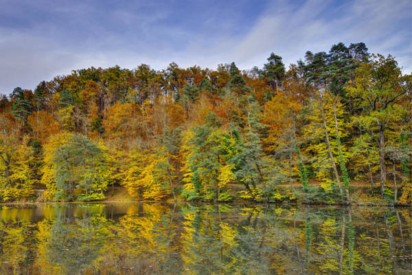 Photograph - Colorful Autumn Trees by Ivan Slosar