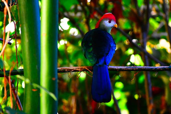 Wall Art - Photograph - Colorful Bird Macau by Utpal Datta