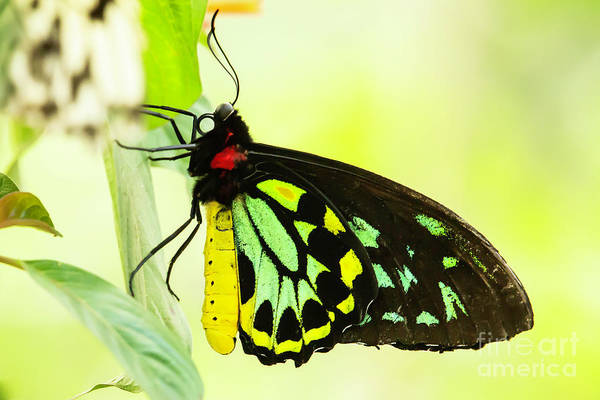 Wall Art - Photograph - Colorful Bird Wing Butterfly by Sabrina L Ryan