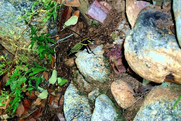 Photograph - Colorful Bug Captured During Kartchner Mountain Hike  by Stanley Morganstein