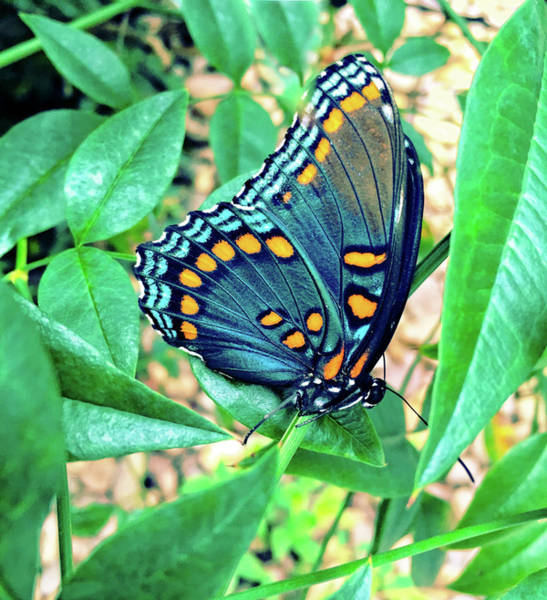 Photograph - Colorful Butterfly by Susan Leggett