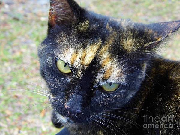 Photograph - Colorful Calico Eyebrows by D Hackett