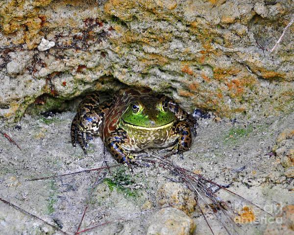 Bull Frog Photograph - Colorful Camo by Al Powell Photography USA