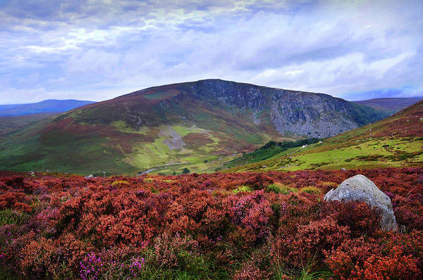 Photograph - Colorful Carpet Of Wicklow Hills by Jenny Rainbow