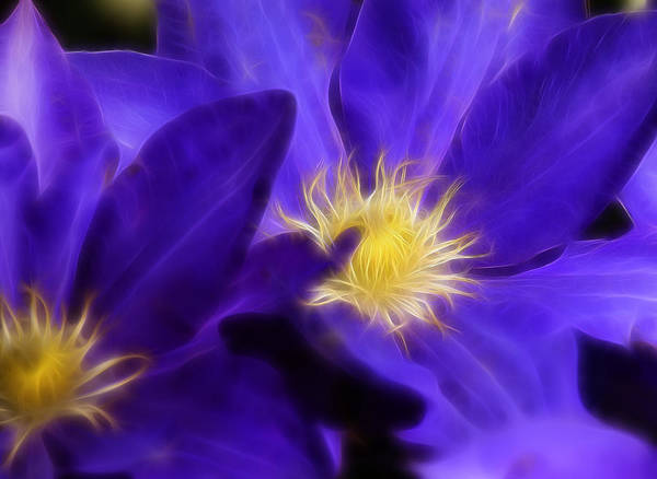 Blooms Digital Art - Colorful Clematis by Ricky Barnard