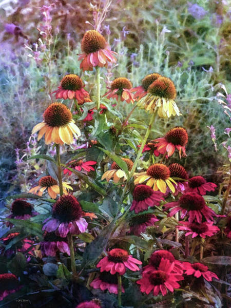 Photograph - Colorful Coneflower Garden 3619 Idp_2 by Steven Ward