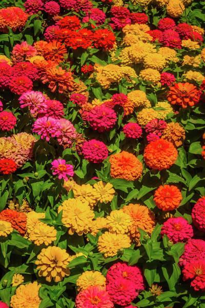 Wall Art - Photograph - Colorful Dahlia Garden by Garry Gay