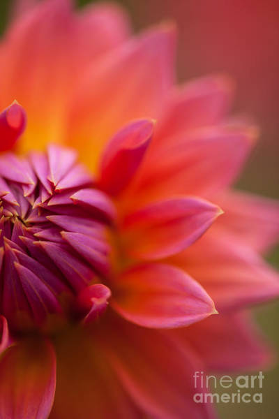 Dahlias Photograph - Colorful Details by Mike Reid