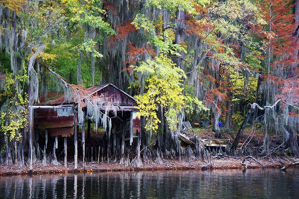 Bald Cypress Photograph - Colorful Drought by Lana Trussell