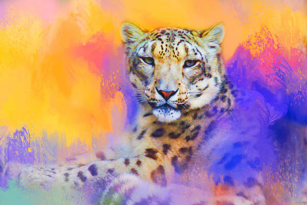 Photograph - Colorful Expressions Snow Leopard by Jai Johnson