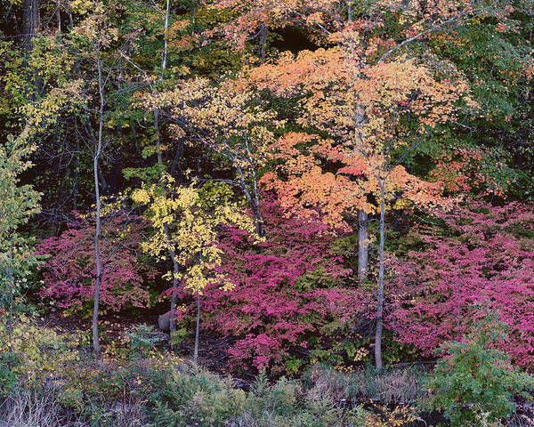 Photograph - Colorful Fall Foliage by Rona Black