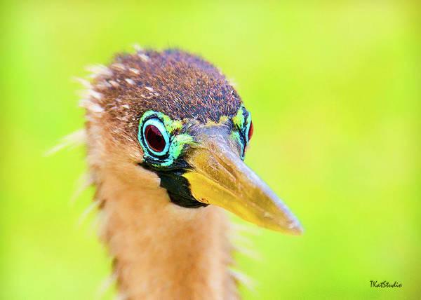 Photograph - Colorful Female Anhinga by Tim Kathka