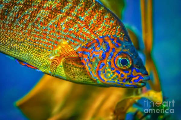 Monterey Bay Aquarium Photograph - Colorful Fish by Mitch Shindelbower