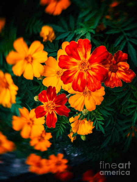 Wall Art - Photograph - Colorful Flowers by Silvia Ganora