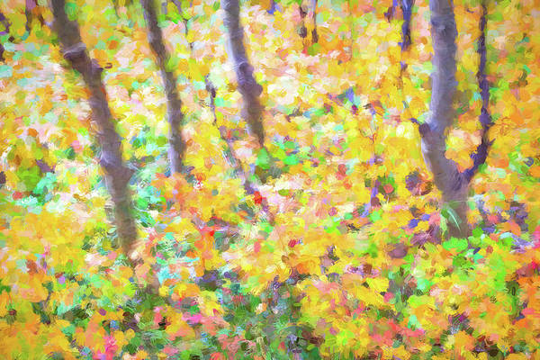 Photograph - Colorful Forest Abstract by James BO Insogna