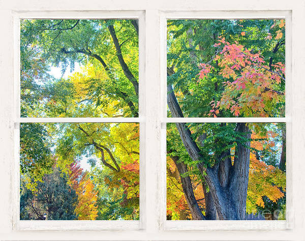 Photograph - Colorful Forest Rustic Whitewashed Window View by James BO Insogna