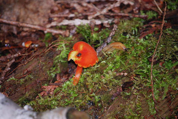 Photograph - Colorful Fungus by Sally Sperry