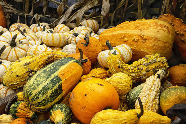 Wall Art - Photograph - Colorful Gourds by Betty Depee