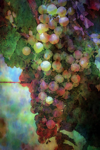 Photograph - Colorful Grapes On The Vine 2666 Dp_2 by Steven Ward