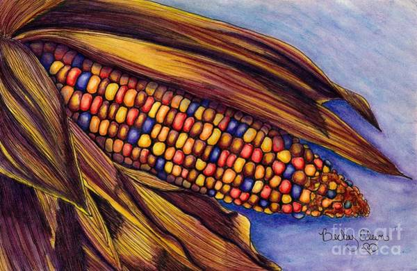Indian Corn Drawing - Colorful Harvest by Becky Eileen Eller