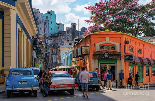 Photograph - Colorful Havana In Bloom by Les Palenik