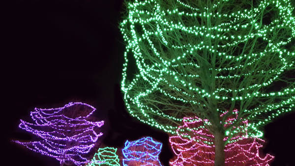 Wall Art - Photograph - Colorful Holiday Lighting by Art Spectrum