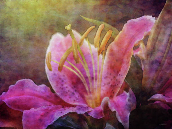 Photograph - Colorful Lily 2563 Idp_2 by Steven Ward