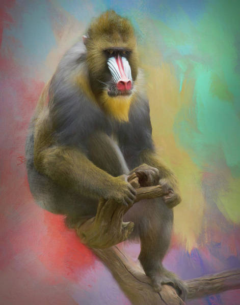 Photograph - Colorful Mandrill by Gloria Anderson
