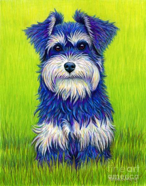 Pet Portrait Drawing - Colorful Miniature Schnauzer Dog by Rebecca Wang