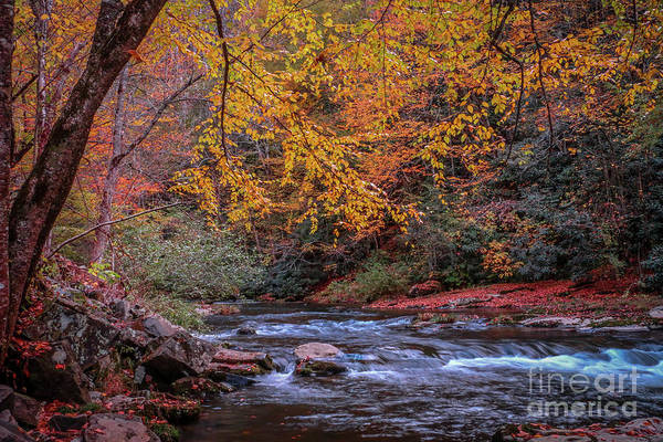 Photograph - Colorful Mountain Stream by Tom Claud