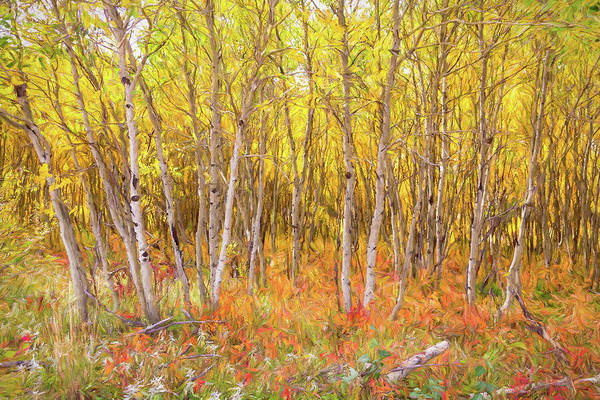 Photograph - Colorful Nature Forest Countryside by James BO Insogna
