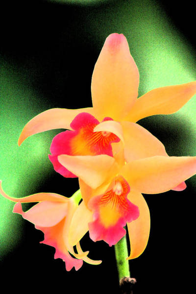 Colorful Orchid Art Print by Nanette Hert