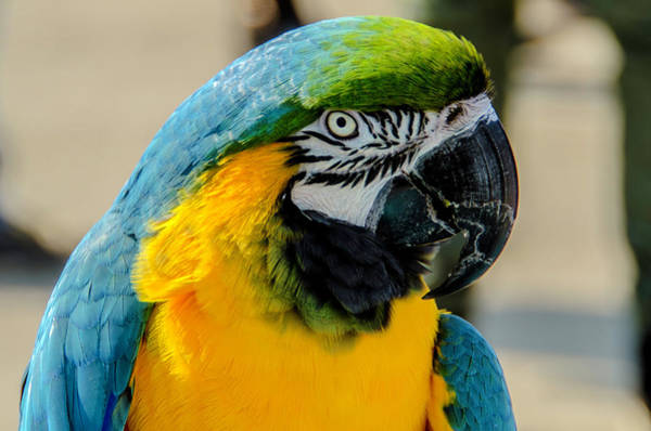 Photograph - Colorful Parrot by Wolfgang Stocker