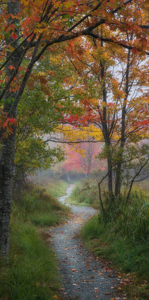 Photograph - Colorful Pathway by Darylann Leonard Photography