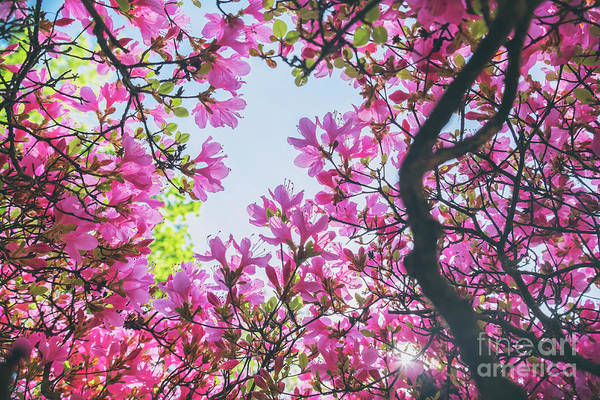 Photograph - colorful plant in Japanese park by Ariadna De Raadt