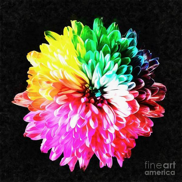 Wall Art - Painting - Colorful Rainbow Flower by Edward Fielding