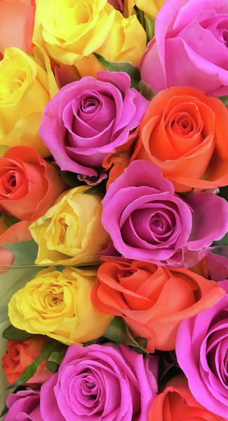 Wall Art - Photograph - Colorful Roses by Tom Gowanlock