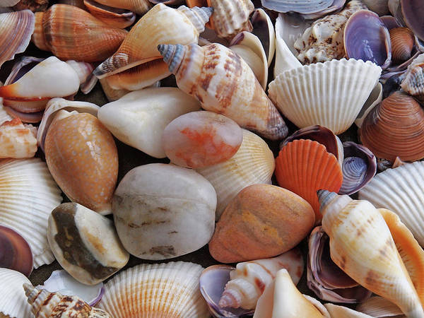 Photograph - Colorful Shells And Pebbles by Gill Billington