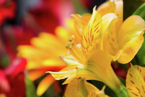 Photograph - Colorful Spring Flowers by SR Green