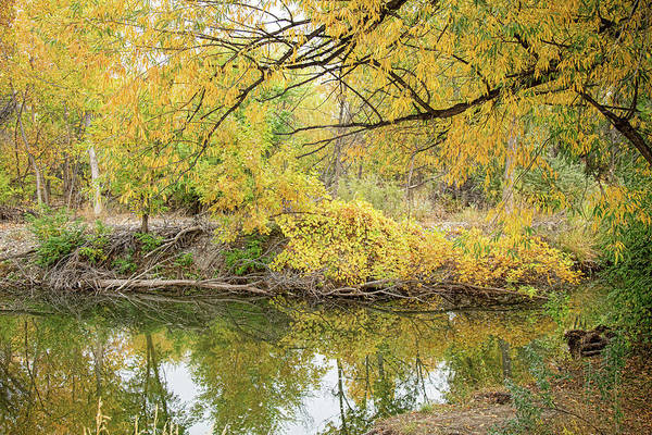 Photograph - Colorful Stream Banks Reflections by James BO Insogna