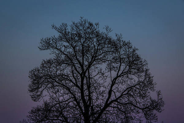 Photograph - Colorful Subtle Silhouette by Darryl Hendricks