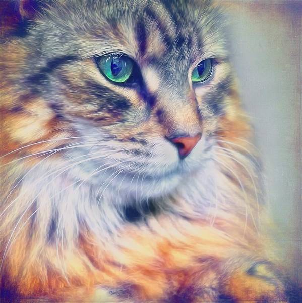 Long Hair Cat Photograph - Colorful Tabby Cat Portrait by Wolf Shadow Photography