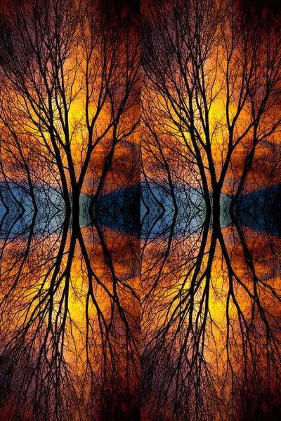 Photograph - Colorful Tree Branches Abstract  Four by James BO Insogna