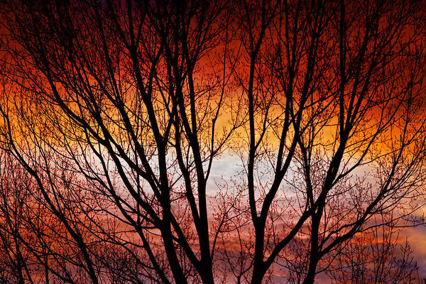 Photograph - Colorful Tree Branches by James BO Insogna