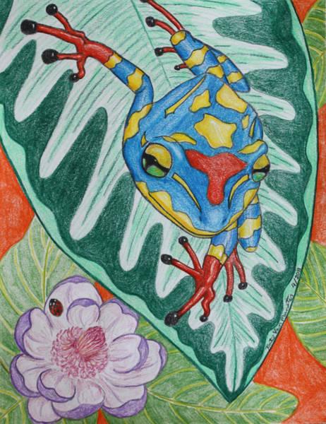 Lady Bug Drawing - Colorful Tree Frog by Katelijn Van Munster