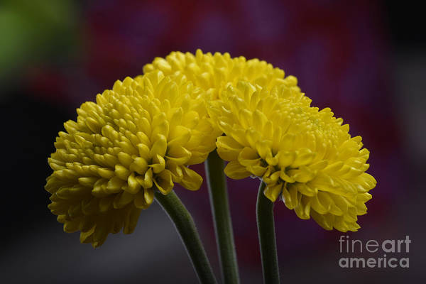Photograph - Colorful Triplet by Robert WK Clark