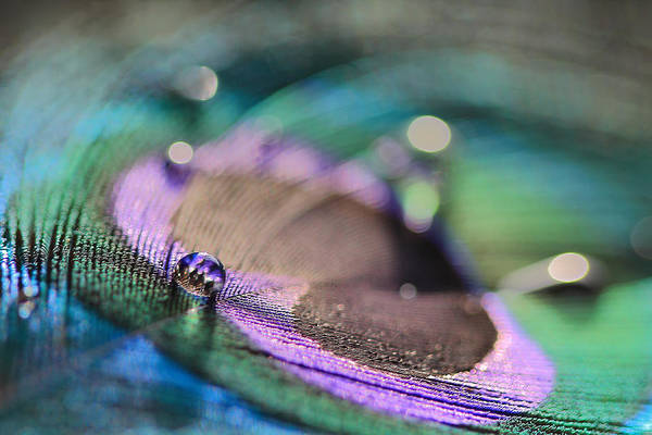 Photograph - Colorful Water Droplet by Angela Murdock
