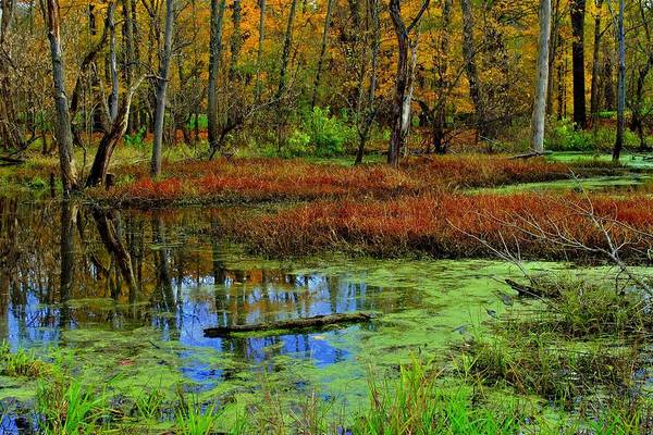 red colored wetlands - 600×400