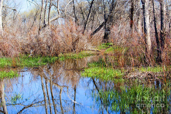 Photograph - Colorful Wetlands Viewing Area In Chatfield State Park by Steve Krull